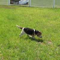 Photo taken at Evander Square - Dog Park by Andrea M. on 6/9/2014