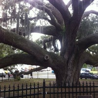 Photo taken at Safety Harbor Big Tree by Chris M. on 1/13/2013