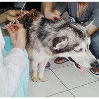 Photo taken at Klinik Hewan Kuningan FKH UGM by Fathma P. on 12/11/2012