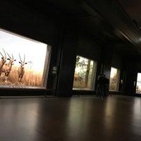 Photo prise au Hall of North American Mammals par Christopher d. le3/3/2017