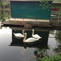 Photo taken at Swan Lake by Olga B. on 5/15/2013