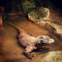 Foto scattata a Houston Zoo da Avigdor - Realtor M. il 11/3/2012