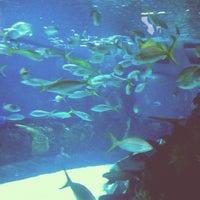 Photo prise au Denver Downtown Aquarium Restaurant par Theo S. le10/28/2013