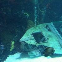 Photo prise au Denver Downtown Aquarium Restaurant par Theo S. le8/3/2013
