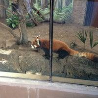 1/28/2013 tarihinde Chaz S.ziyaretçi tarafından Red Panda Habitat'de çekilen fotoğraf