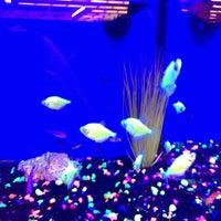 Photo taken at Petco by Tarrah L. on 12/18/2012