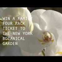 Photo taken at Monet's Garden at The New York Botanical Garden by Vault T. on 4/30/2014
