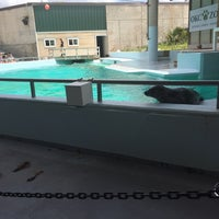 Photo taken at Sea Lion Show by Marcus K. on 4/19/2017