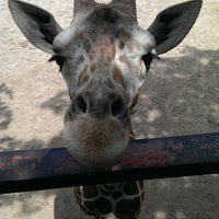 Photo taken at Dickerson Park Zoo by Robb B. on 6/25/2013