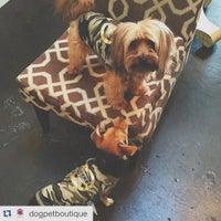 DOG Pet Boutique