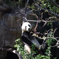 Photo taken at San Diego Zoo by llorch D. on 9/17/2013