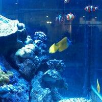 Photo taken at Atlantis Aquarium by Rouzort on 12/27/2012