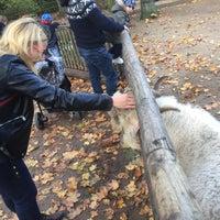 10/22/2017에 Kasia J.님이 Tierpark Neukölln에서 찍은 사진