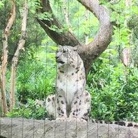 5/20/2017 tarihinde Zekiye E.ziyaretçi tarafından Central Park Zoo - Snow Leopard'de çekilen fotoğraf