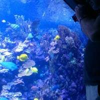 Photo taken at Maui Ocean Center, The Hawaiian Aquarium by Suzanne K. on 9/18/2012