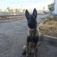 Photo taken at УФС по ветеринарному и фитосанитарному надзору by Belly M. on 7/16/2015
