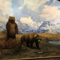 Photo prise au Hall of North American Mammals par Emily M. le9/10/2017