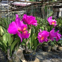 Photo taken at Orchid Farm by Andrew S. on 3/10/2013