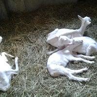 Photo taken at Zoo Schmiding by Otto E. on 8/11/2013