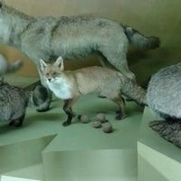 Photo taken at Latvijas dabas muzejs | Latvian Museum Of Natural History by Annamarija T. on 5/18/2013