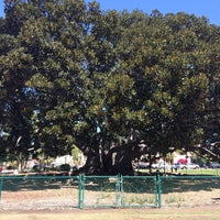 Photo taken at Moreton Bay Fig Tree by Katie P. on 3/28/2015