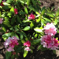 Photo taken at Coastal Maine Botanical Gardens by Julie D. on 5/27/2013
