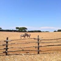 Photo taken at Brijuni National Park by Dima P. on 7/24/2013