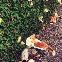 10/19/2014 tarihinde Gizem K.ziyaretçi tarafından Kırkpınar Yürüyüş Yolu'de çekilen fotoğraf