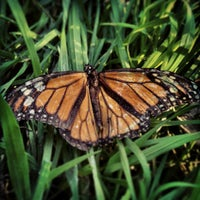 Photo taken at Coronado Butterfly Preserve by Susan S. on 2/25/2013