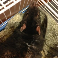 Photo taken at VCA Ocean View Animal Hospital by Scott M. on 8/16/2013