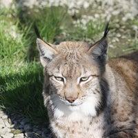 Foto tomada en ZOO KOKI (Parque zoológico y botánico) por ZOO KOKI (Parque zoológico y botánico) el 12/28/2012