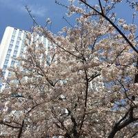 4/5/2017にippyon_fが和泉公園で撮った写真