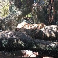 Photo taken at The Mirage Aquarium by Adel❗ on 10/29/2017