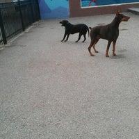 Photo taken at Churchill Field Dog Park by Natalie G. on 11/3/2012