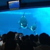 Photo taken at Port of Nagoya Public Aquarium by Teddy on 8/16/2013