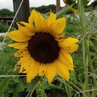 Photo taken at Waltham Fields Community Farm by Deb B. on 8/1/2013