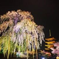 4/5/2013にMasanori M.が東寺 (教王護国寺)で撮った写真
