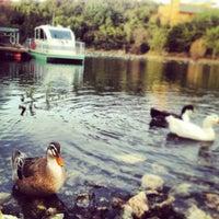 2/27/2013 tarihinde Gizem A.ziyaretçi tarafından Gölet'de çekilen fotoğraf