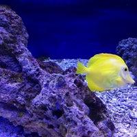 Photo taken at Океанариум by Ольга on 5/7/2013
