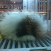 Photo taken at Pet Paradise Java Mall by arya r. on 1/11/2013