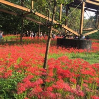 Photo taken at Kinchakuda Manjushage Park by 貴文 古. on 9/26/2017