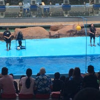 Photo taken at Acquatica - Sea Lion Show by Kaya on 6/18/2016