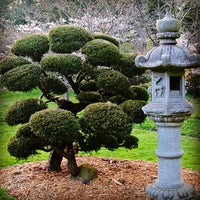 Photo taken at Japanese Tea Garden by Rafael S. on 3/25/2013