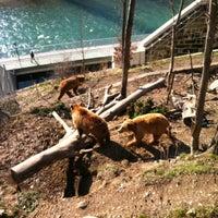 Das Foto wurde bei Bärenpark von Nana I. am 3/15/2013 aufgenommen