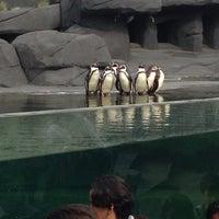 Foto tirada no(a) Parc zoologique de Paris por Tej Eddine C. em 4/12/2014