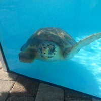 Photo taken at Loggerhead Marinelife Center by Carlos P. on 1/12/2013