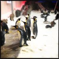 Photo taken at SEA LIFE Melbourne Aquarium by Hennley S. on 12/7/2012