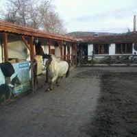 3/3/2013 tarihinde Lela G.ziyaretçi tarafından AtlıTur At Çiftligi'de çekilen fotoğraf