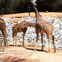 Photo taken at Zoo Atlanta by Jordan J. on 3/17/2013