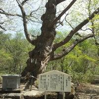Photo taken at 温泉神社御神木 by Novon on 5/18/2013